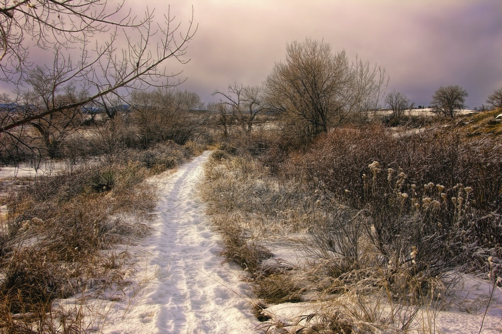 brown leafless trees on snow covered ground under cloudy sky during daytime