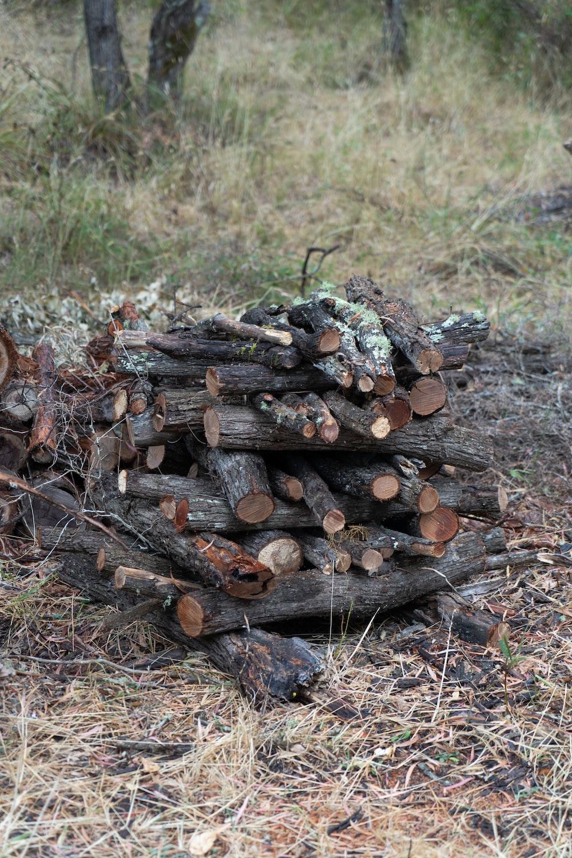 brown wood logs on brown dried leaves