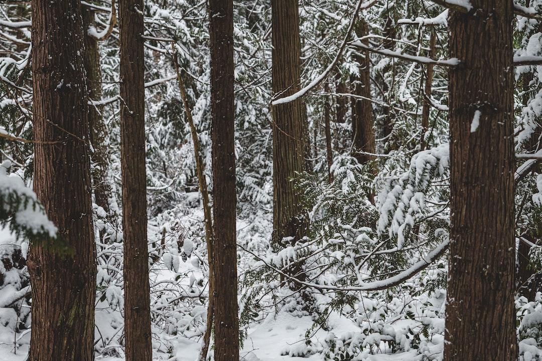 snow day walk