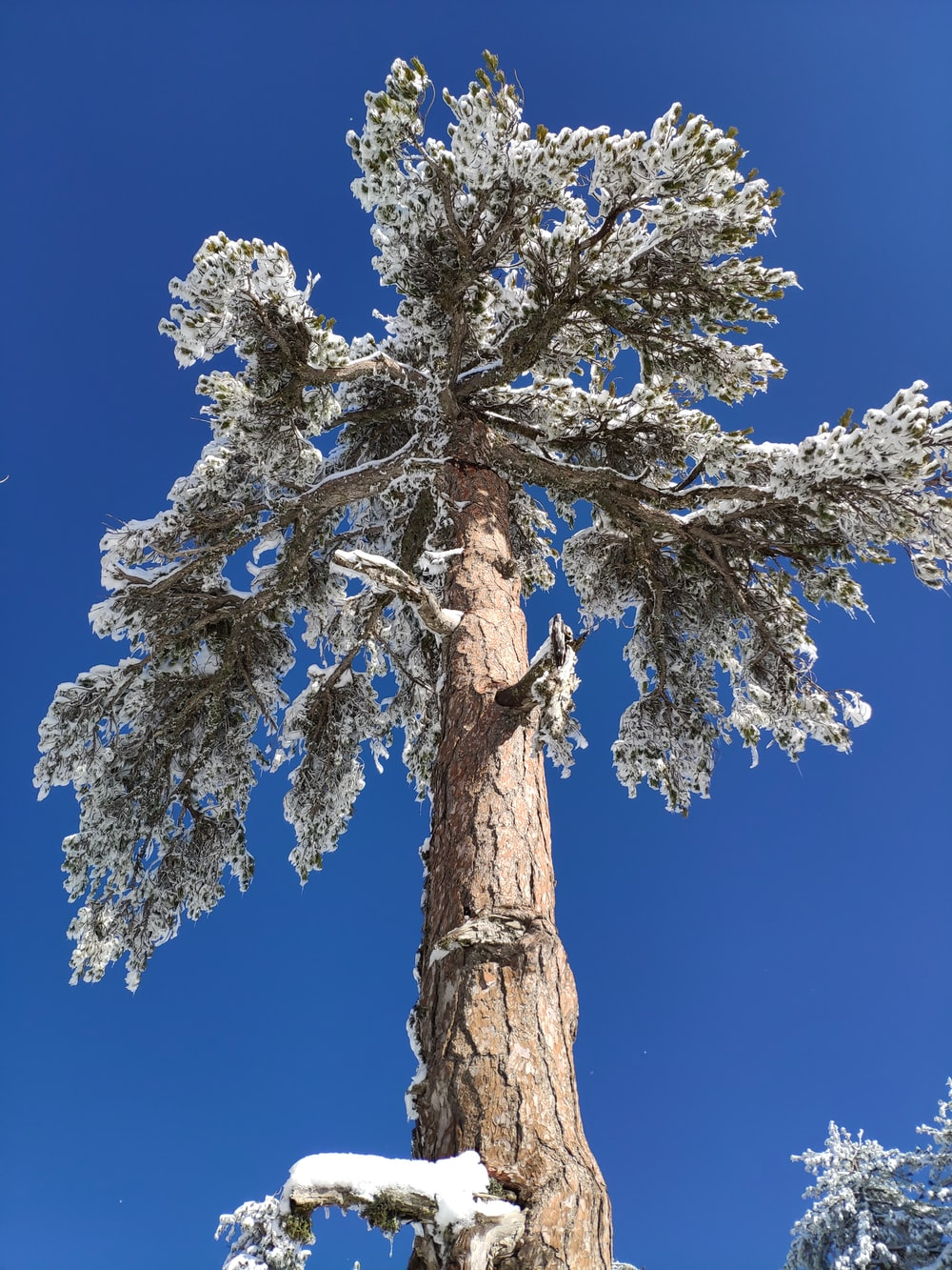 brown tree with white leaves under blue sky during daytime