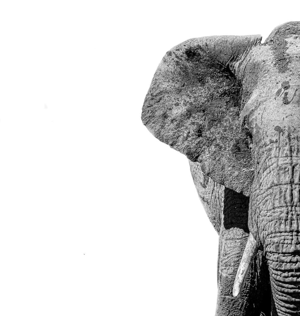 black elephant with white background