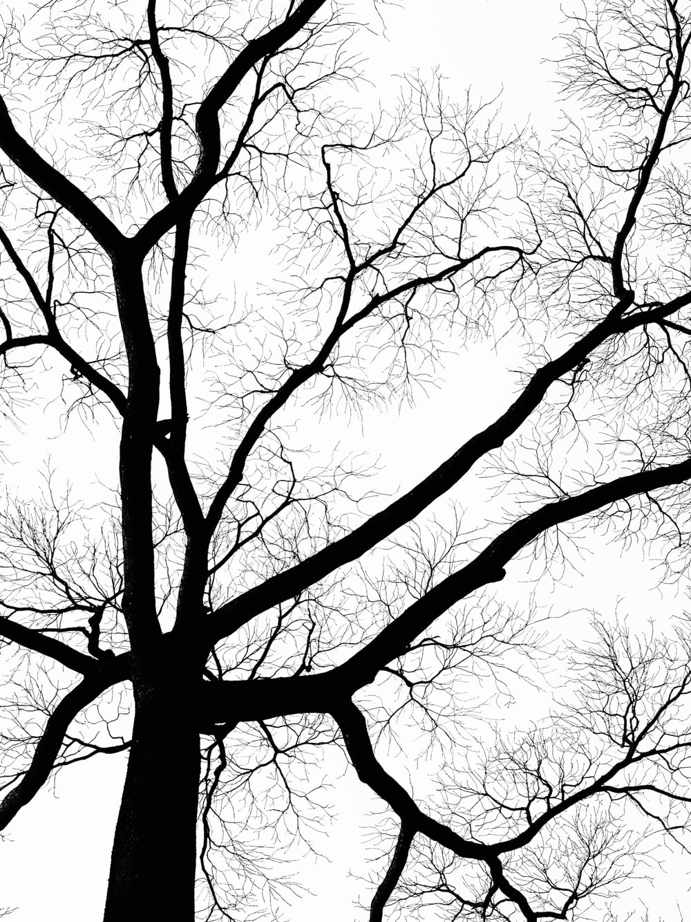 low angle photography of leafless tree