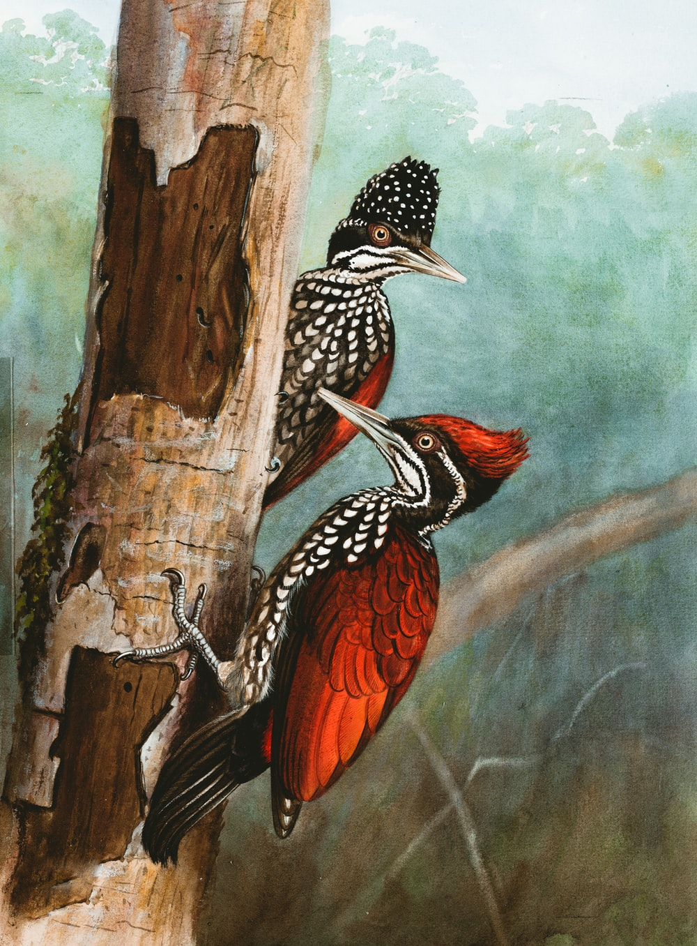 red and black bird on tree branch painting