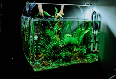 green plant in clear glass fish tank aquarium zoom background