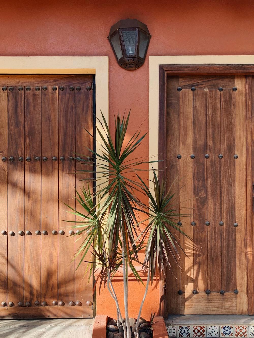 green plant near brown wooden door