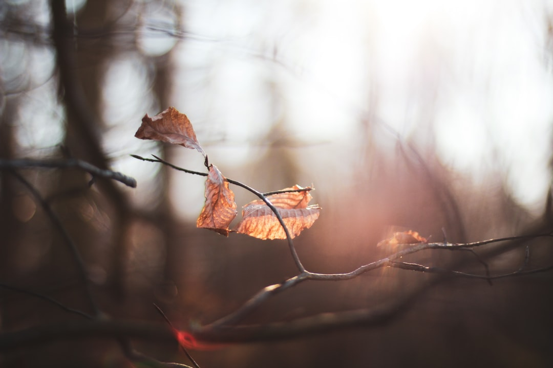 Brown Dried Leaf In Tilt Shift Lens - unsplash