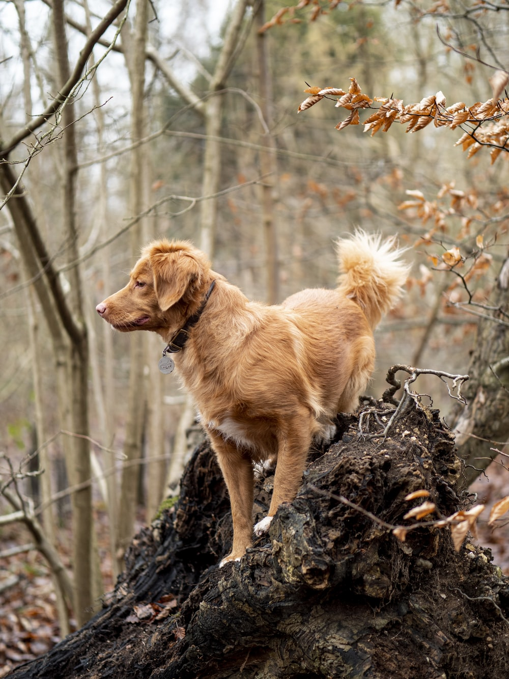 brown short coated medium sized dog on brown tree trunk during daytime