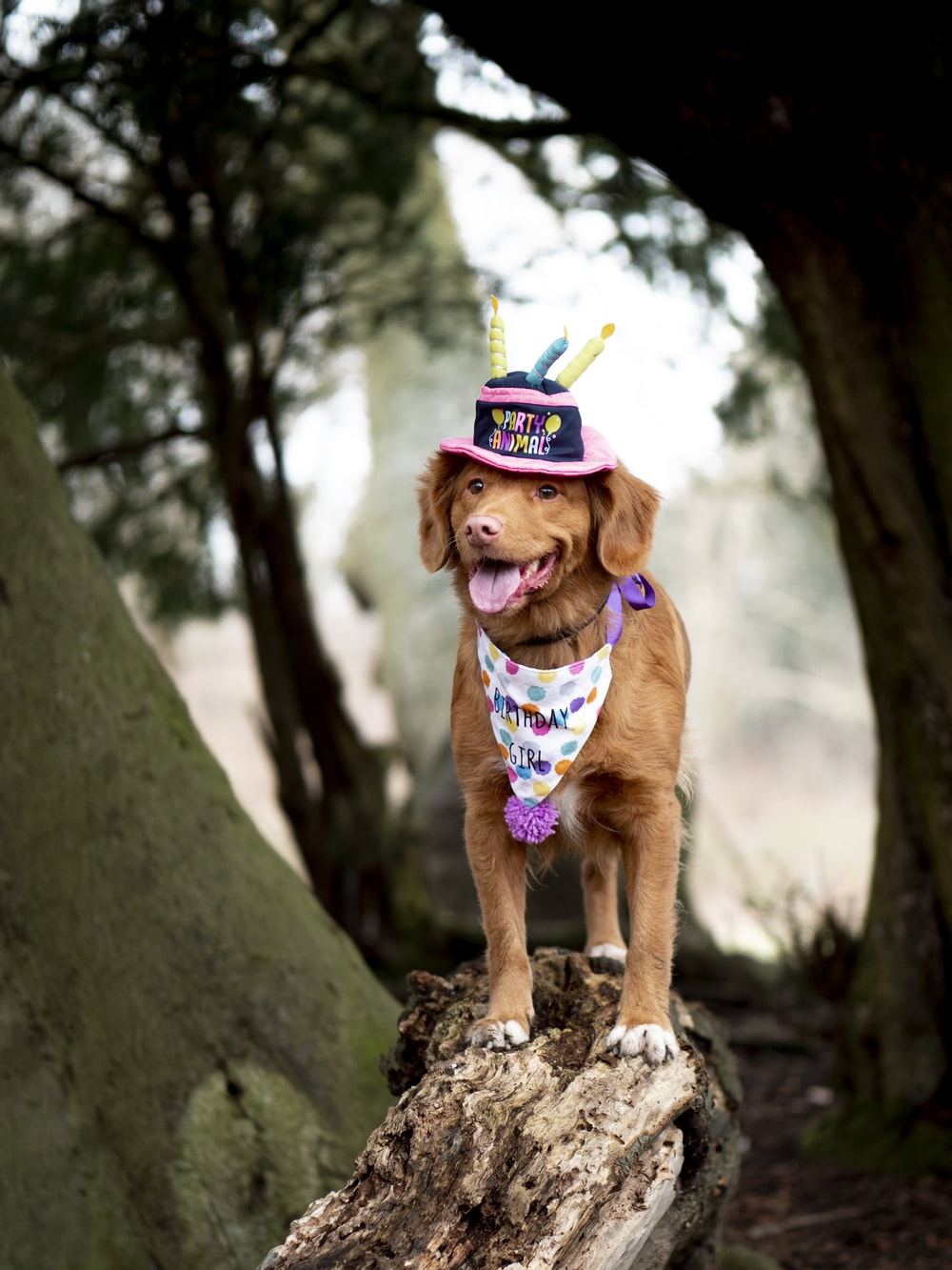 brown short coated dog wearing green and yellow hat