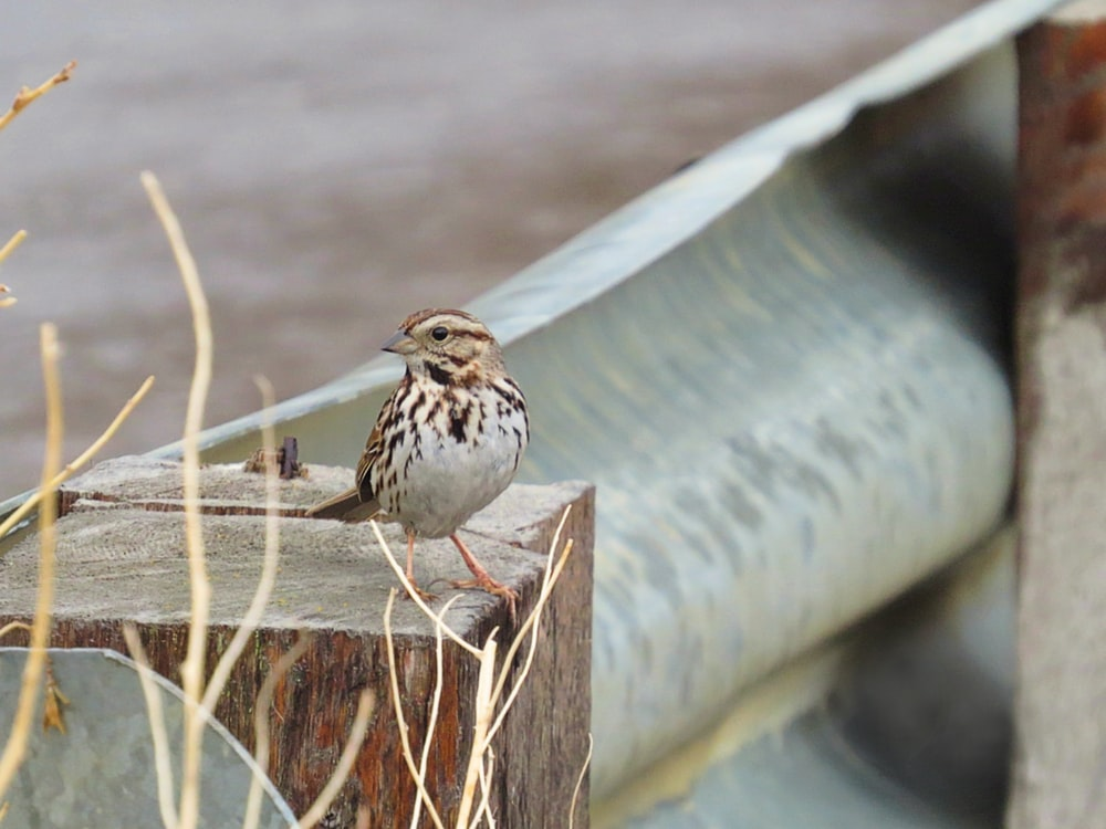 white and brown bird on brown wooden fence during daytime