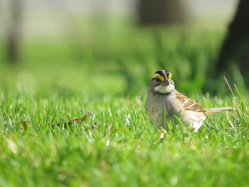 white and brown bird on green grass during daytime