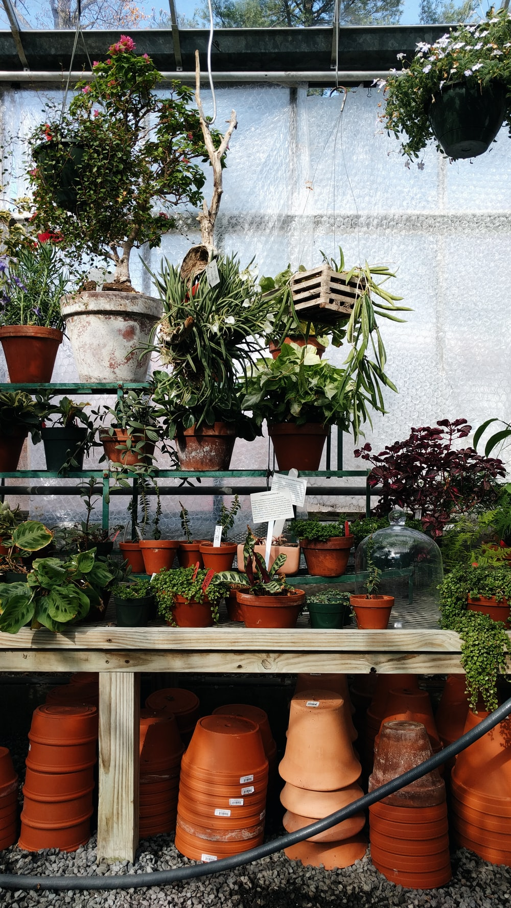 green potted plants on brown wooden shelf