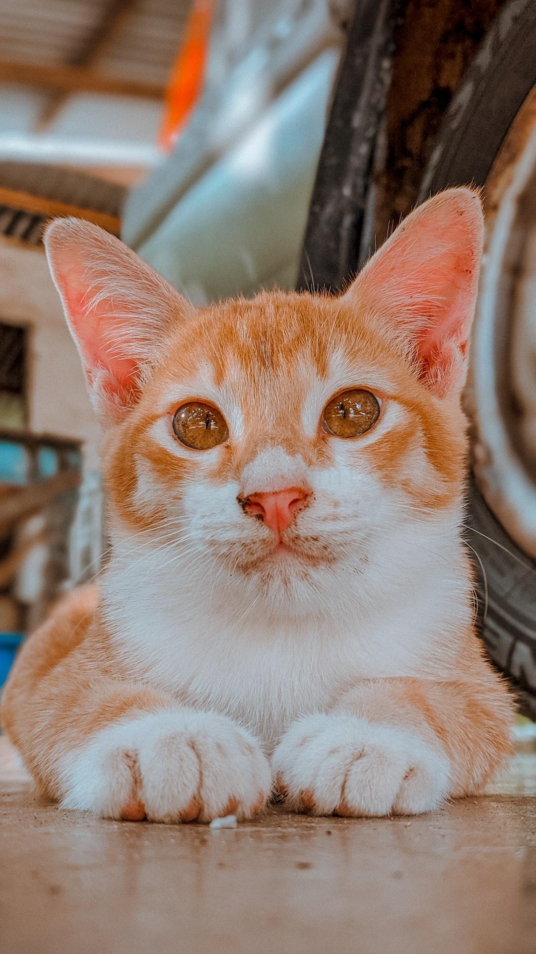Orange cat staring at you