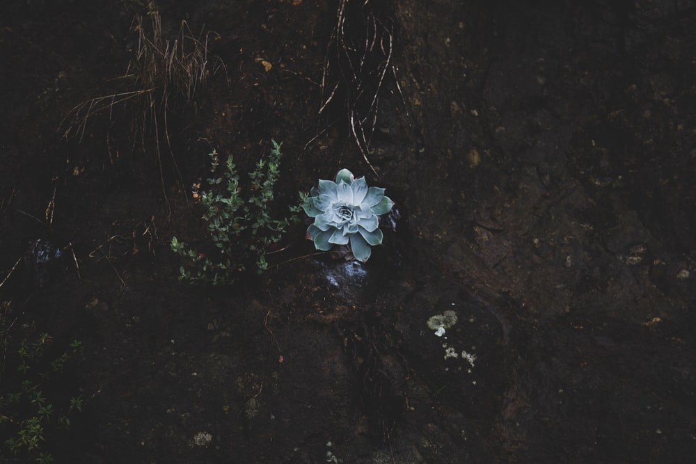 white flower on black soil