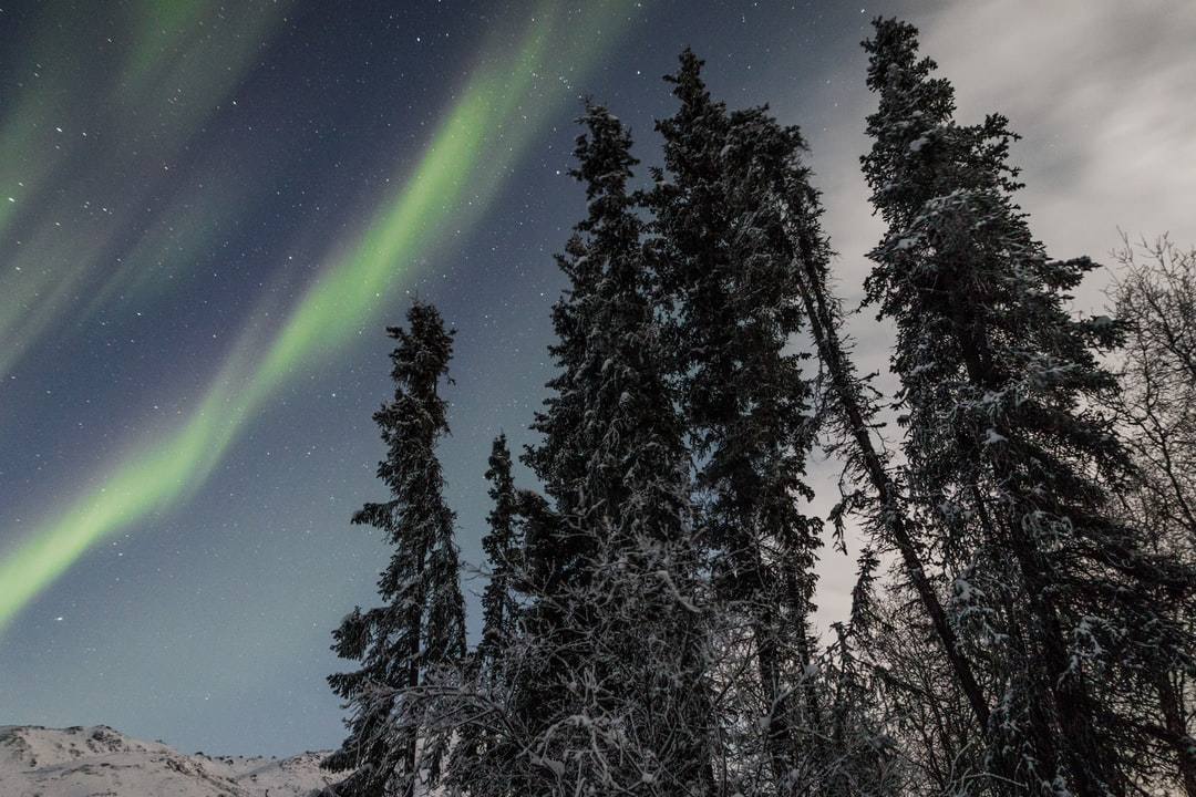A Magical Night Full of Northern Lights (aurora Borealis) In the Winter Forest Coldfoot, Alaska - By Jan Kronies - unsplash