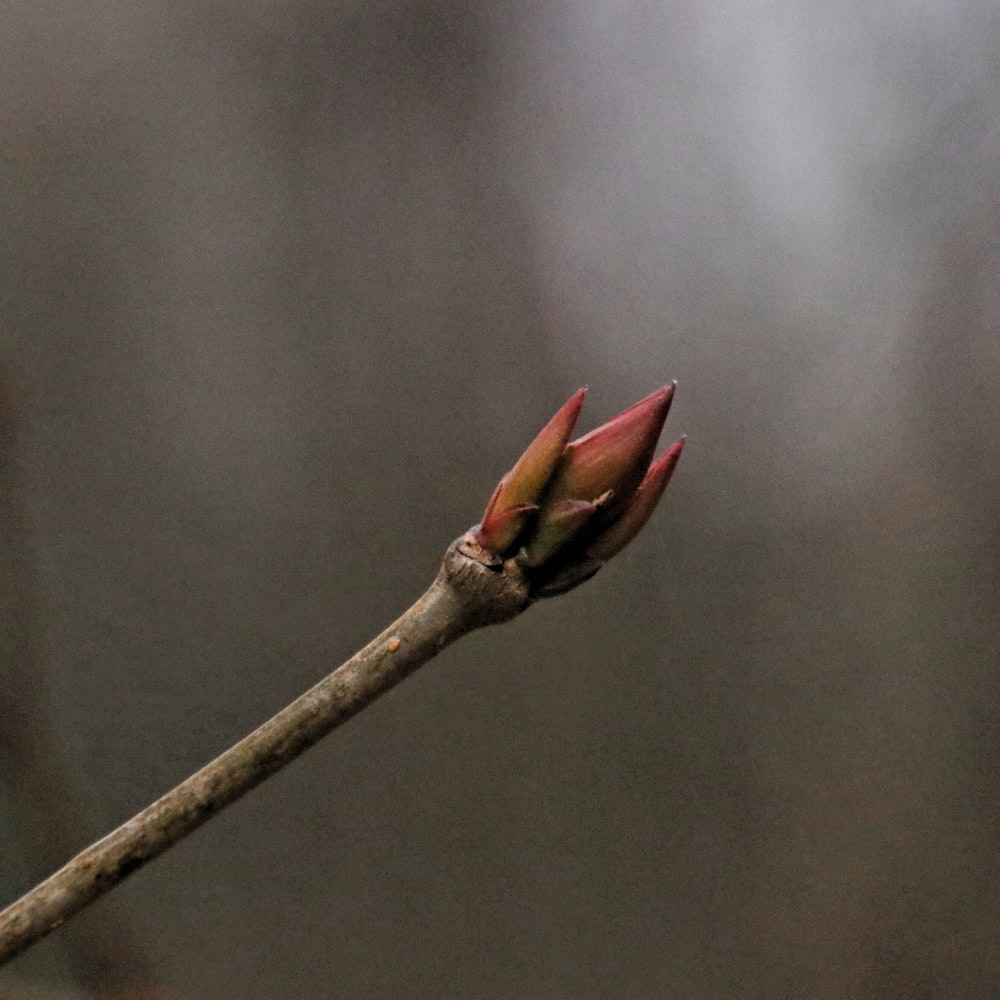 red leaf on brown tree branch