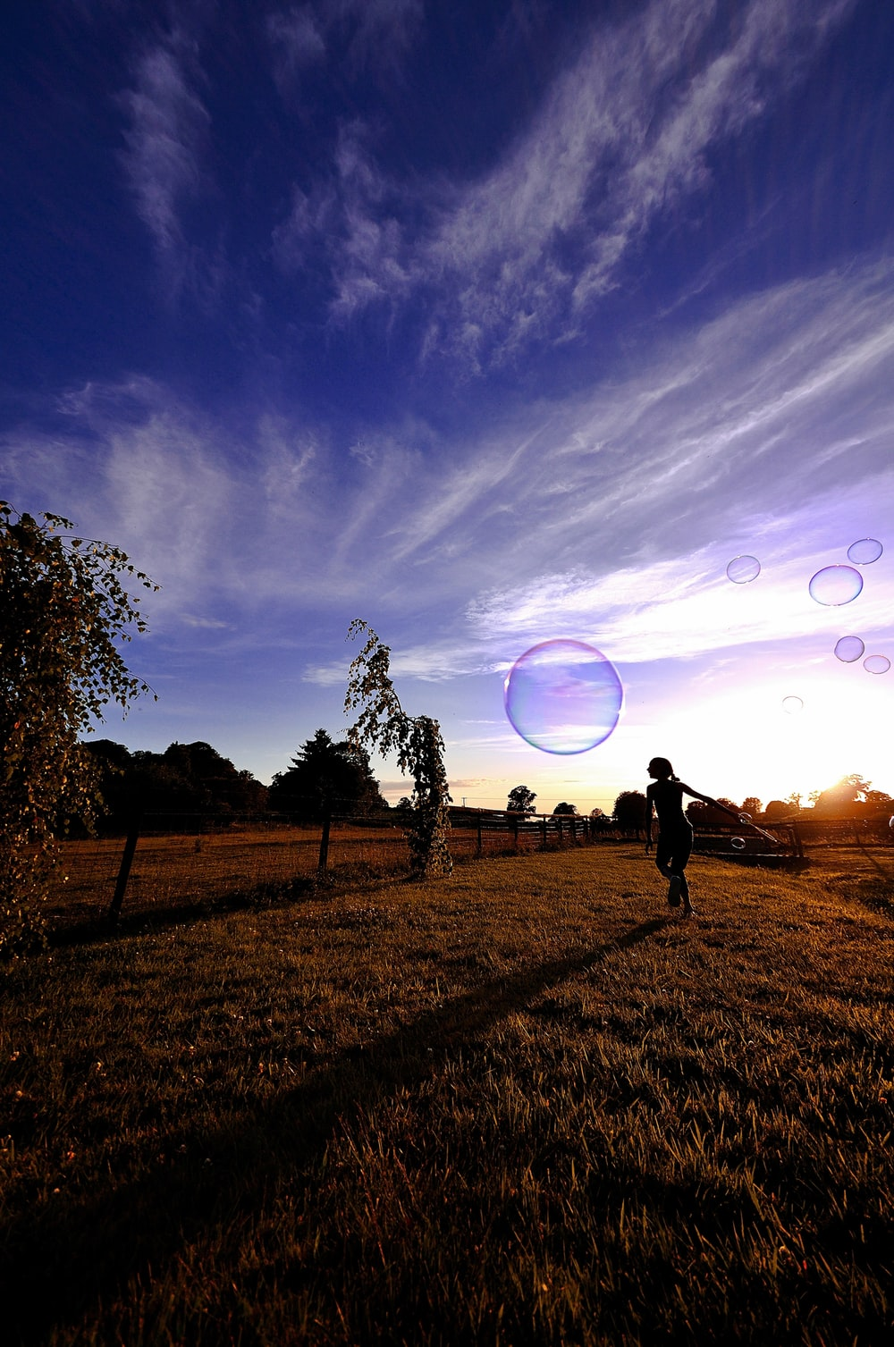 silhouette of 2 people standing on grass field under blue sky with stars during night time