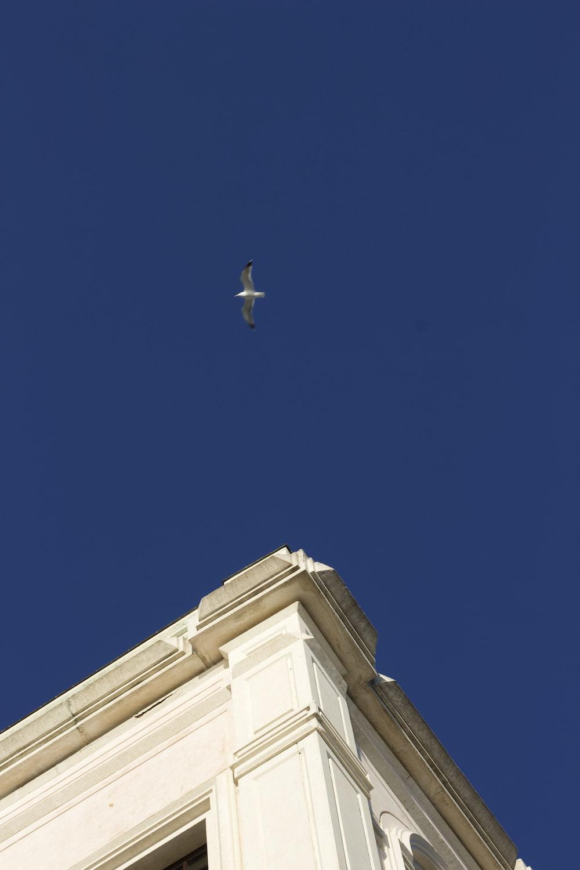white bird flying under blue sky during daytime