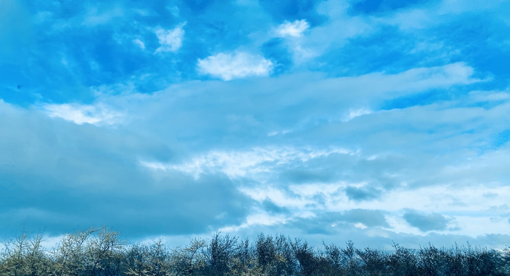 green trees under blue sky and white clouds during daytime