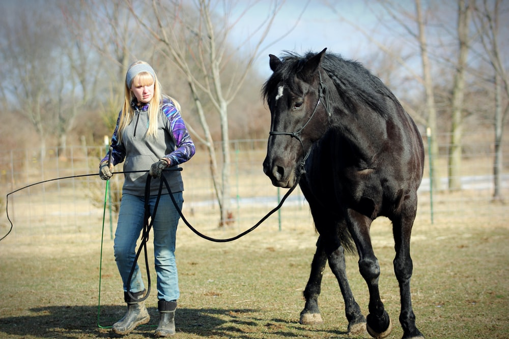 woman in blue denim jacket standing beside black horse during daytime