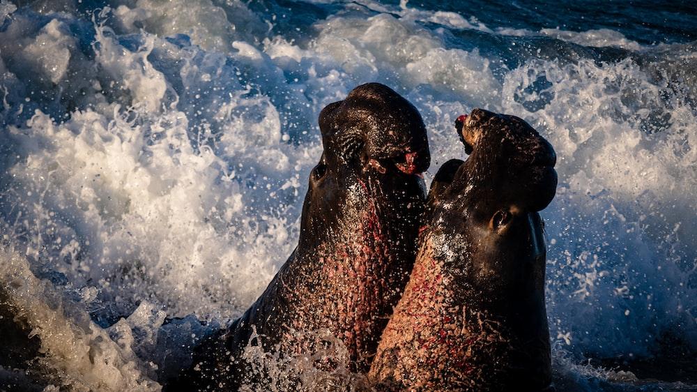 2 black seal on water