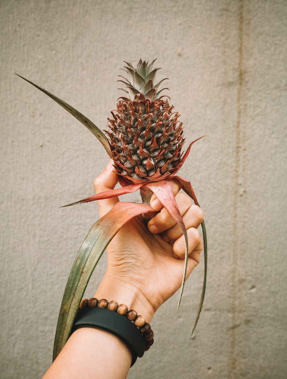 person holding pineapple fruit during daytime
