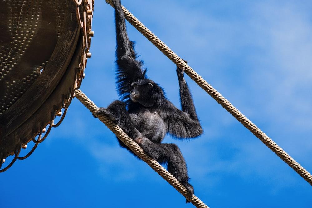 black monkey on brown wooden boat under blue sky during daytime