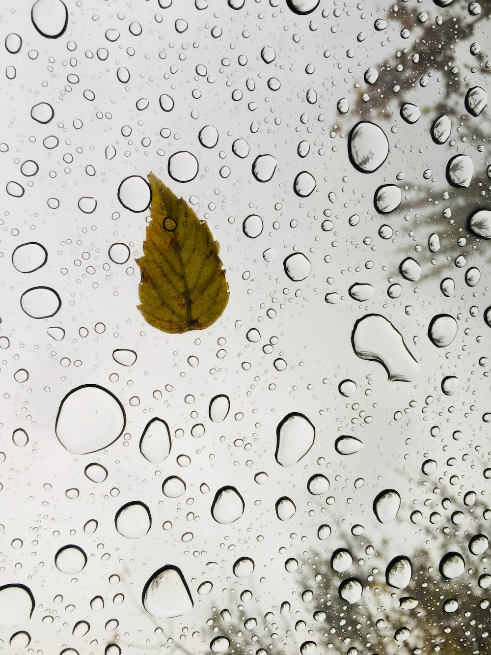 brown leaf on water droplets