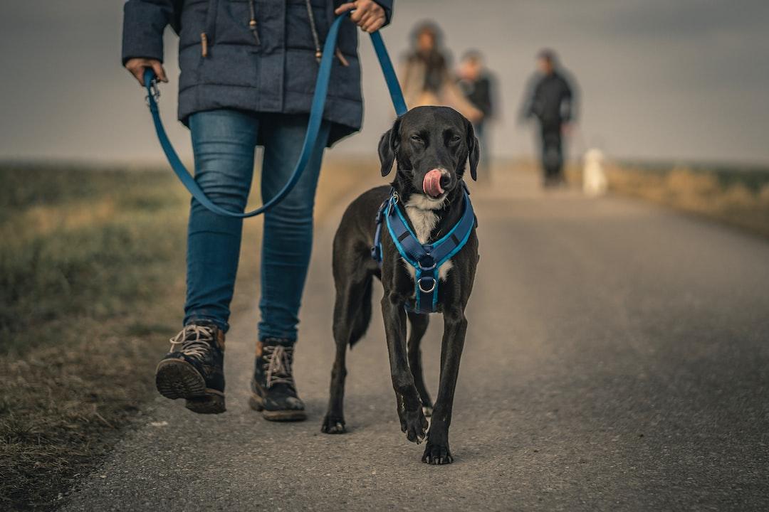Black Short Coated Dog With Blue Collar - unsplash