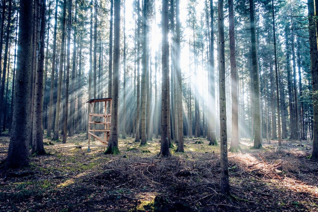 Hunting the Light - unsplash