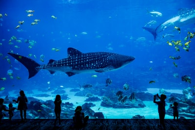 people standing in front of fish tank aquarium zoom background