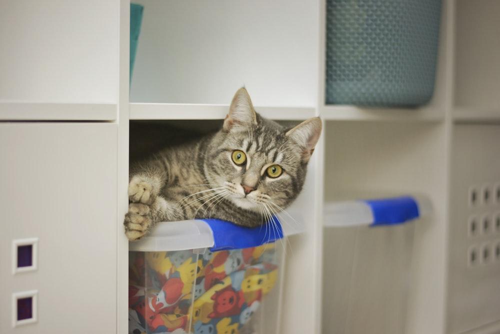 brown tabby cat on white wooden shelf
