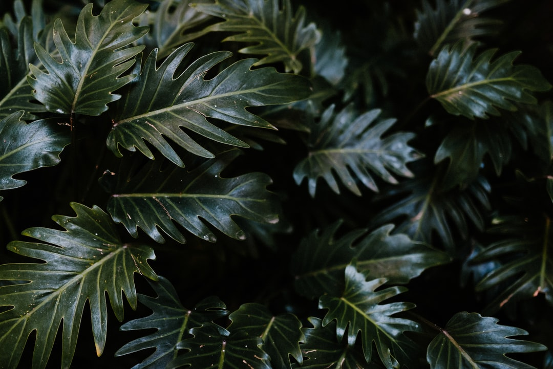Green Leaves In Close Up Photography - unsplash