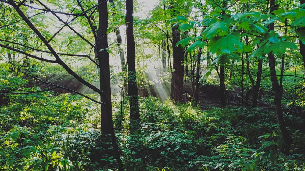 Take a walk through the Jefferson Memorial Forest near Fort Knox.