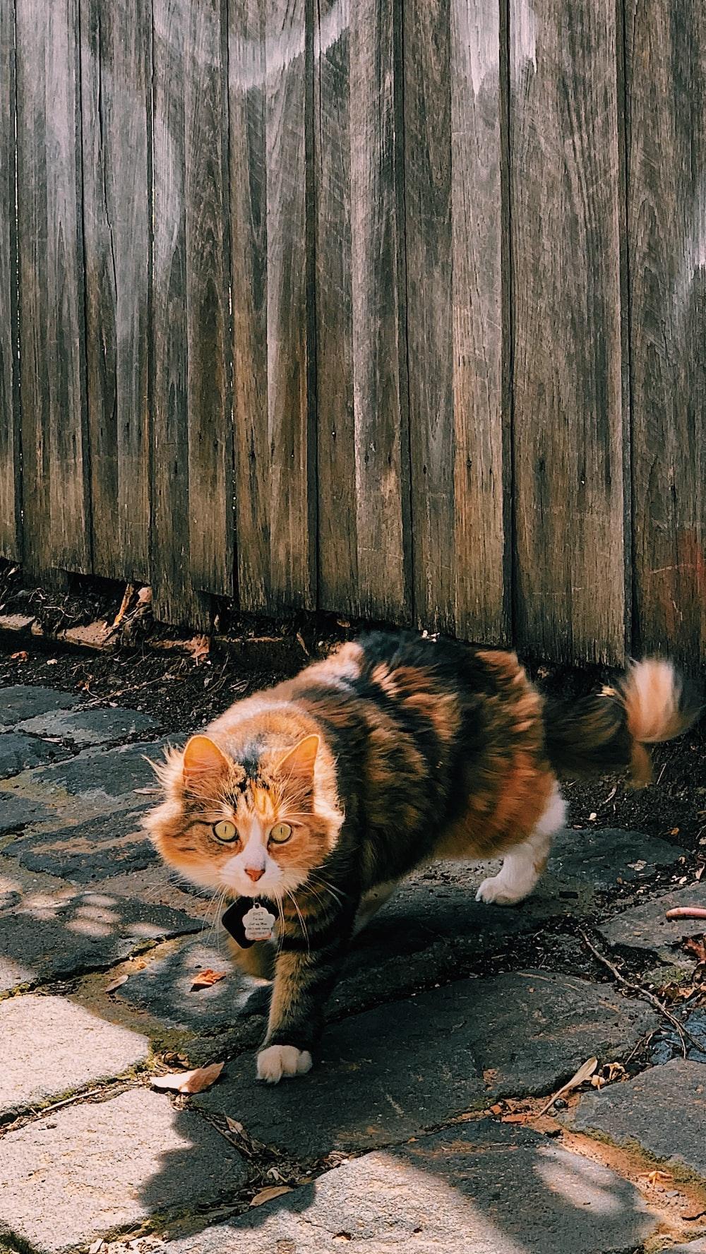 orange and black cat on brown wooden floor