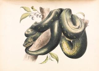 green and black snake illustration