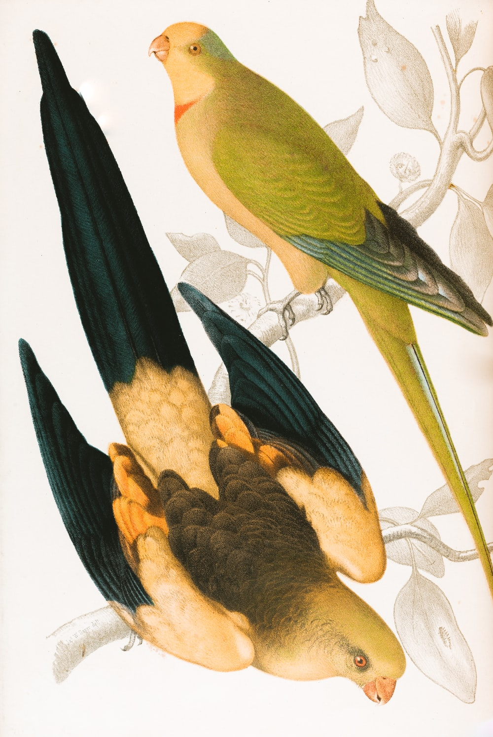 black and yellow bird on yellow bird