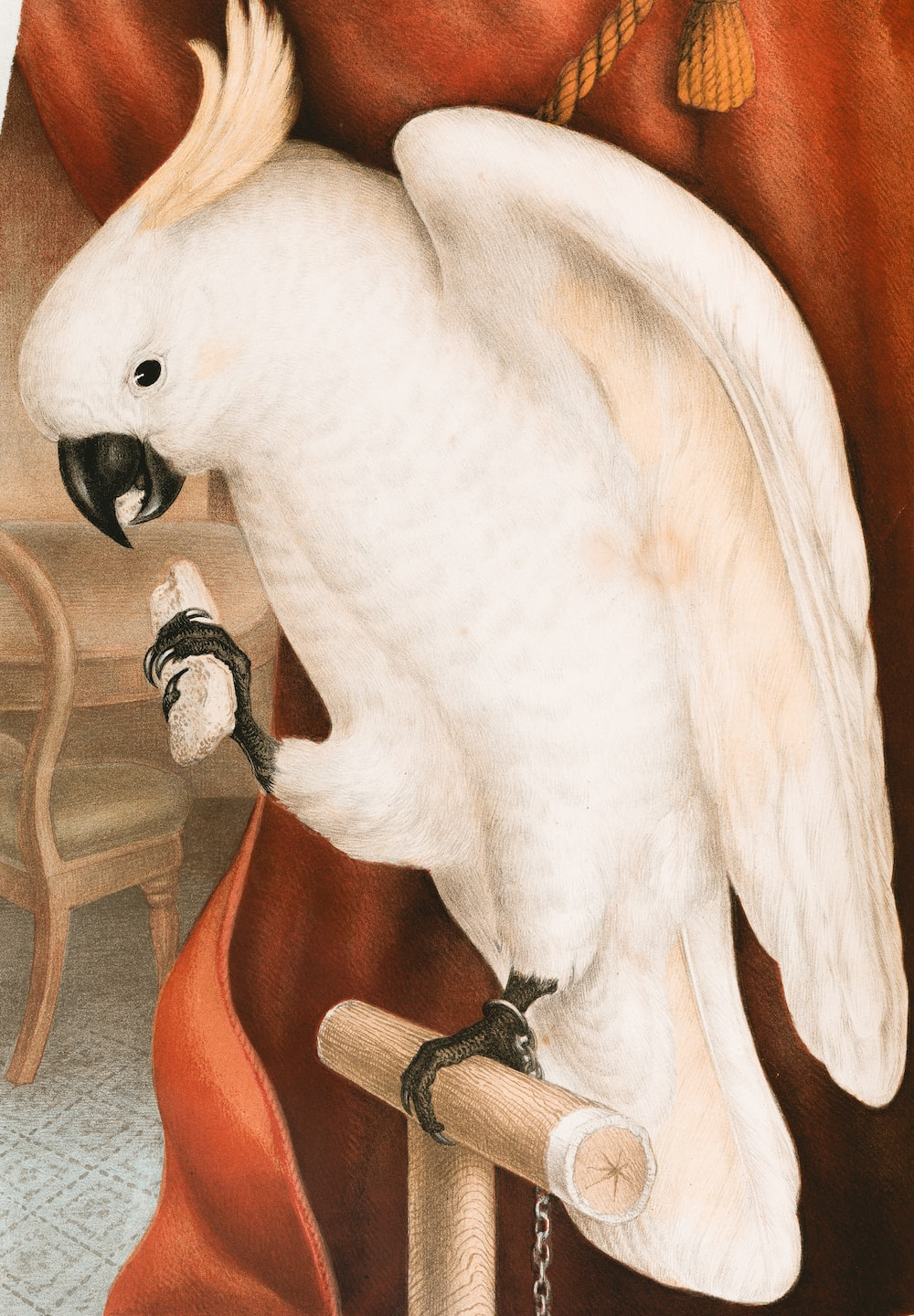 white bird on brown wooden table