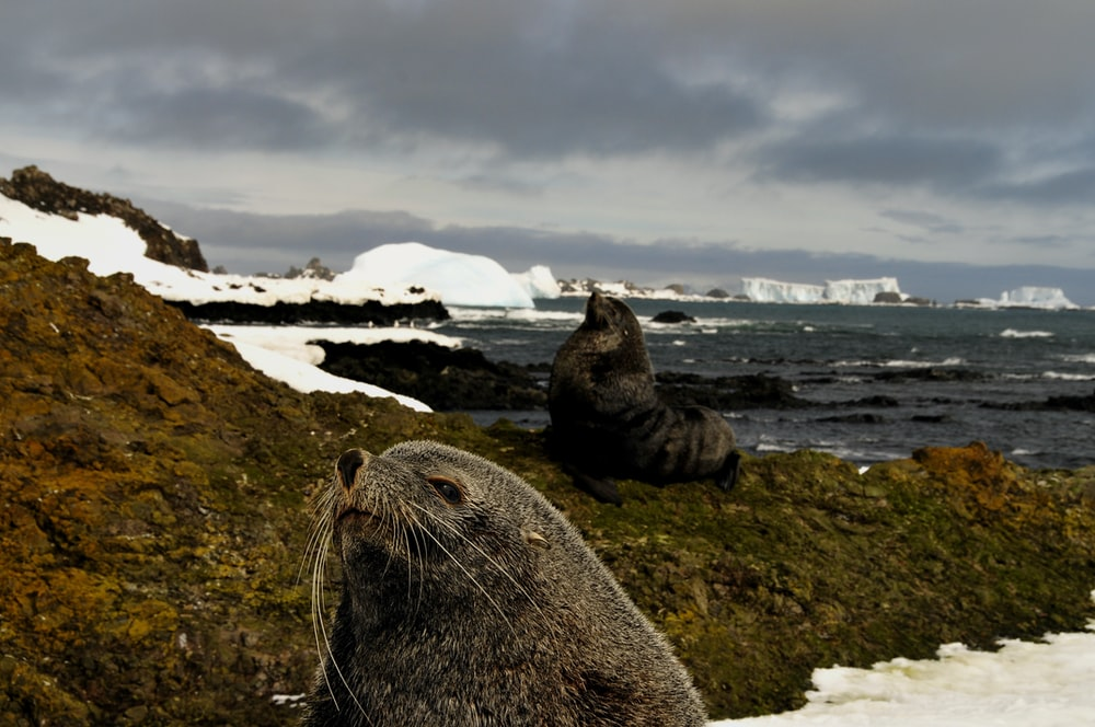 sea lion on rock formation under cloudy sky during daytime