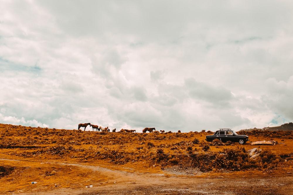 black suv on brown field under white clouds during daytime