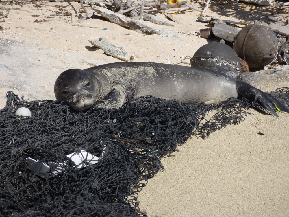 seal lying on sand during daytime
