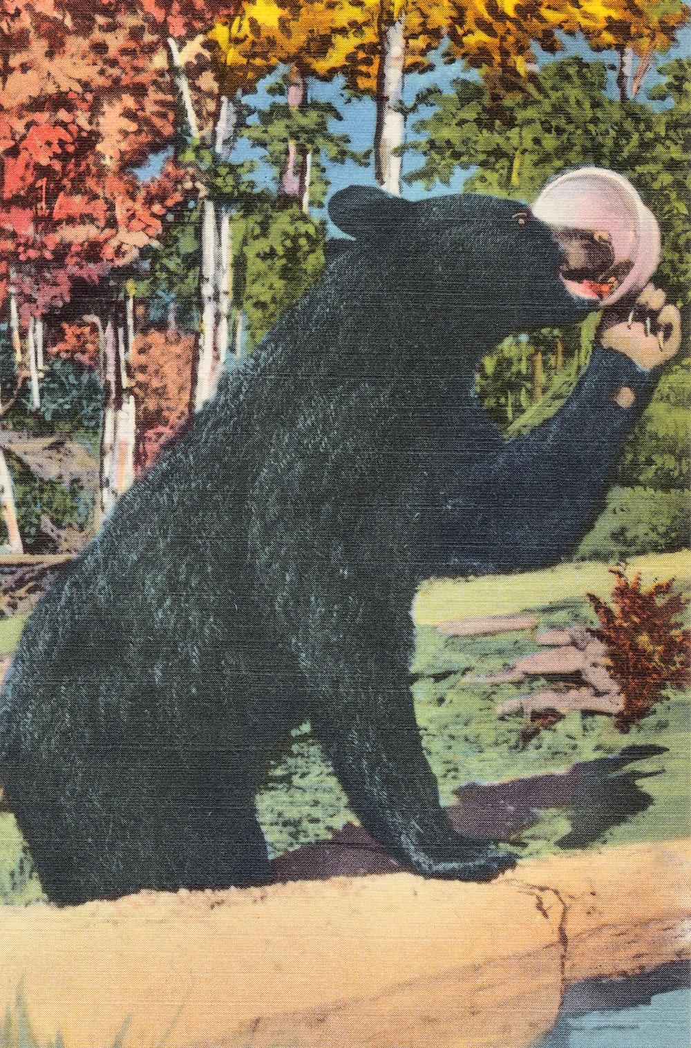 black bear on green grass field during daytime