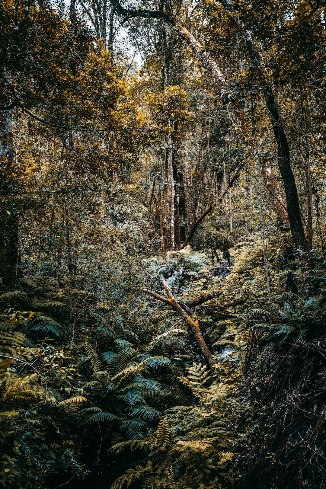 Green jungle rainforest in Knysna, South Africa