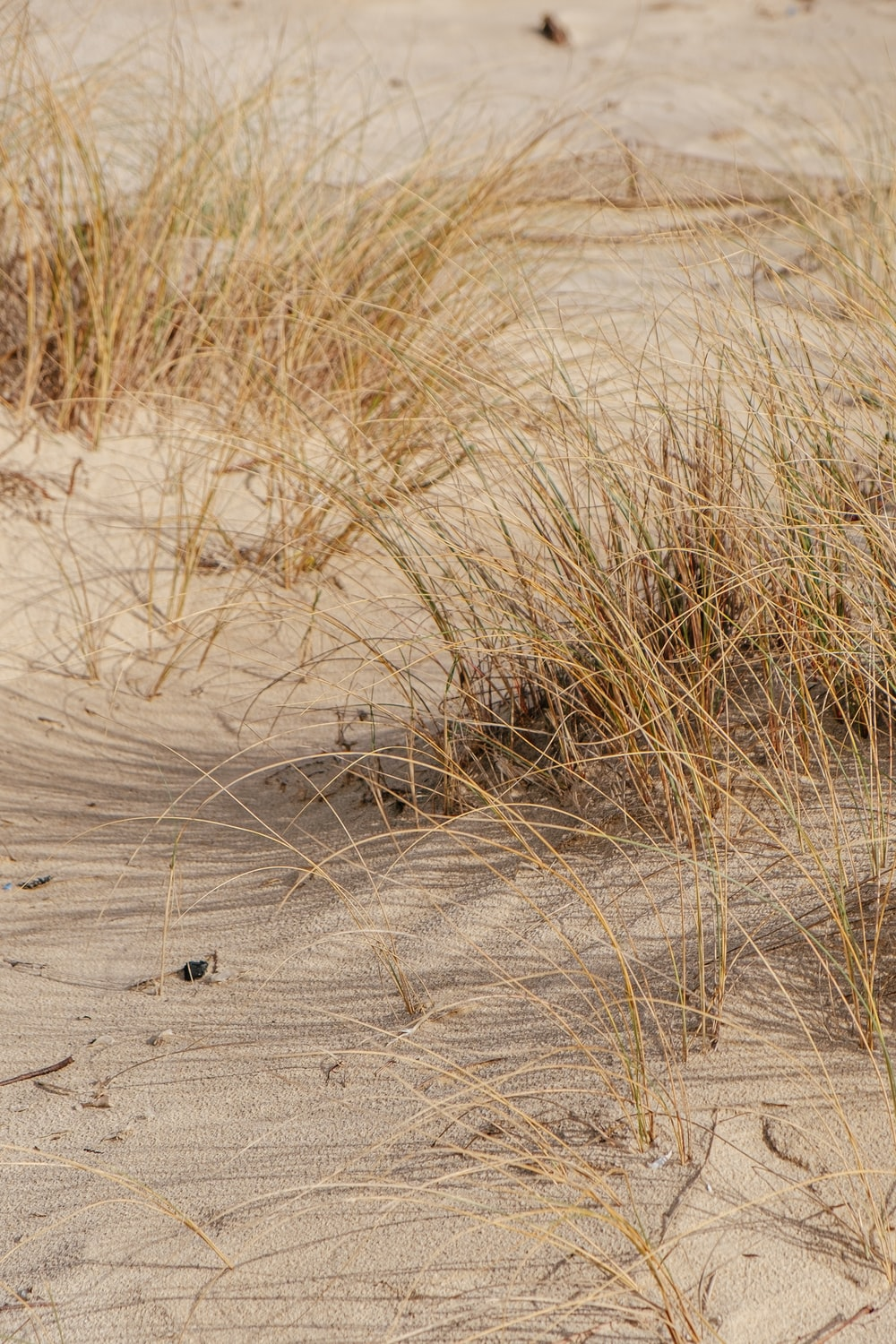 brown grass on brown sand during daytime