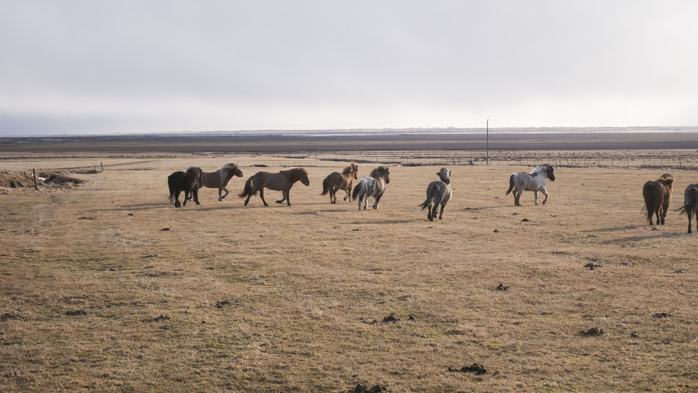 herd of horses on brown field during daytime