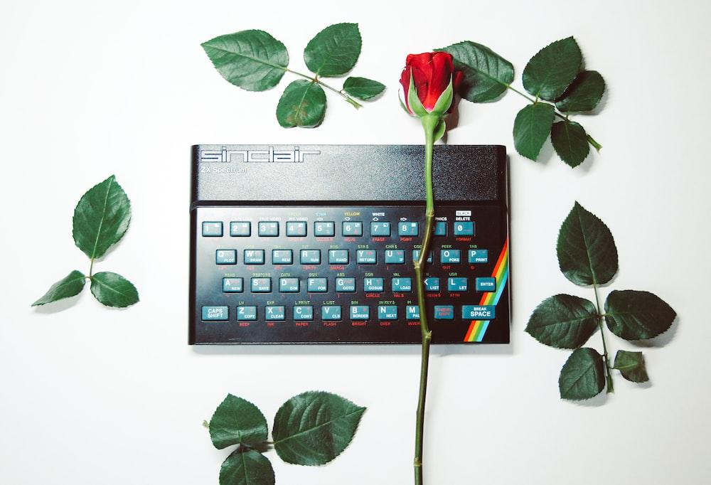 red rose on black computer keyboard