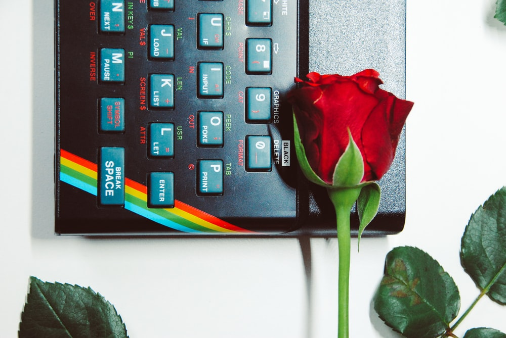 red rose on computer keyboard