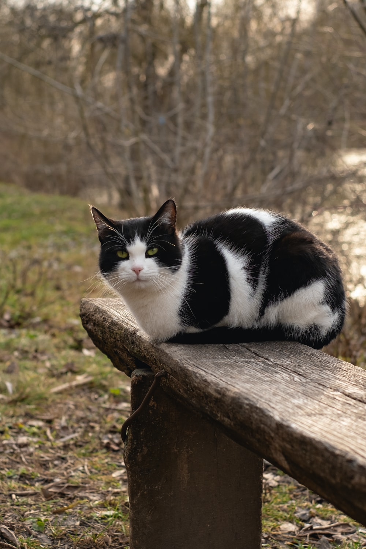 tuxedo cat on brown wooden log