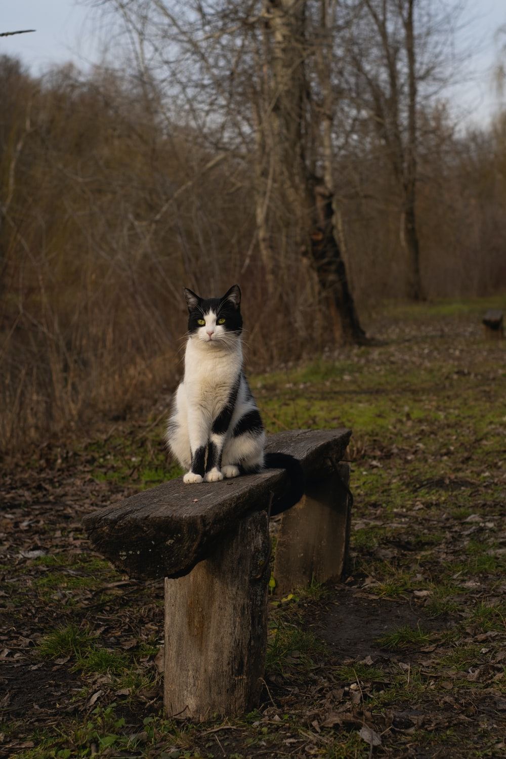 white and black cat on brown wooden log