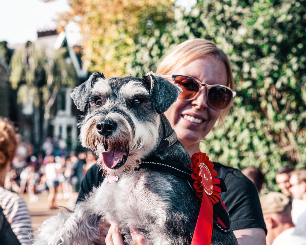 woman in red shirt carrying black and white miniature schnauzer