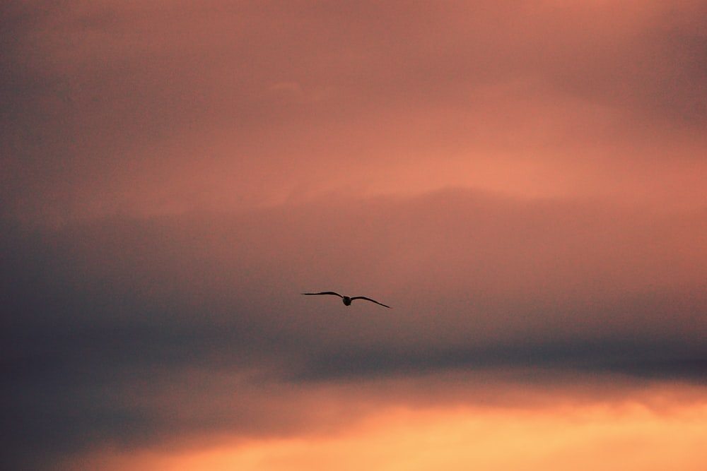 bird flying under cloudy sky during daytime